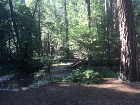 On the trail to Yosemite Falls