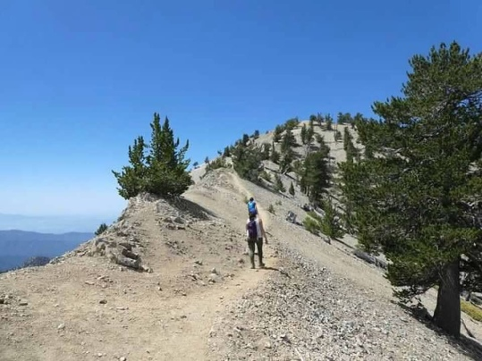 Making our way up to the top of Mt. Baden-Powell