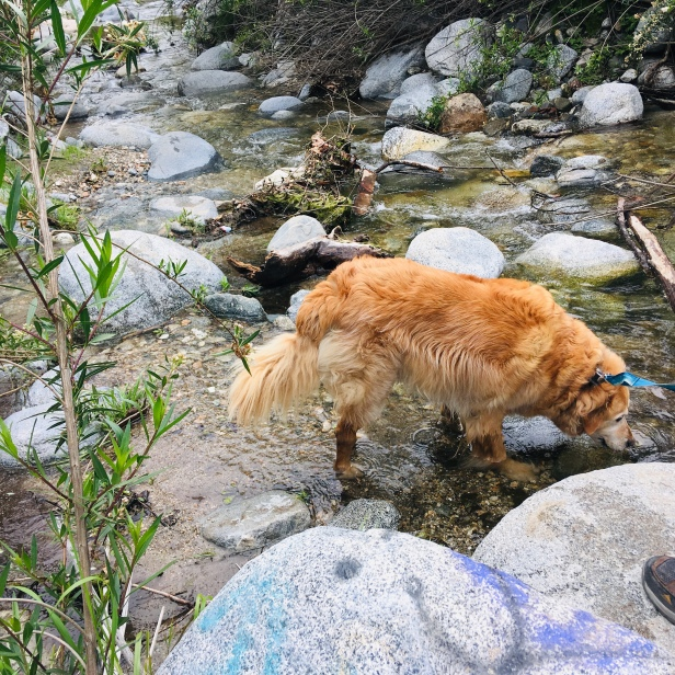 The doggo enjoys the cold water for the last time indefinitely.